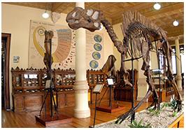 Le musée de géologie